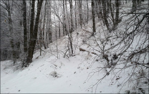 winter-run-2
