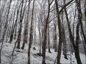 winter-run-3